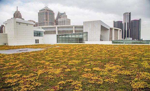 green roof website.jpg